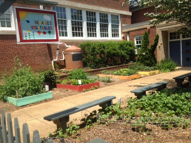 Venable schoolyard garden