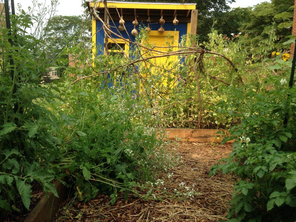 Johnson schoolyard garden